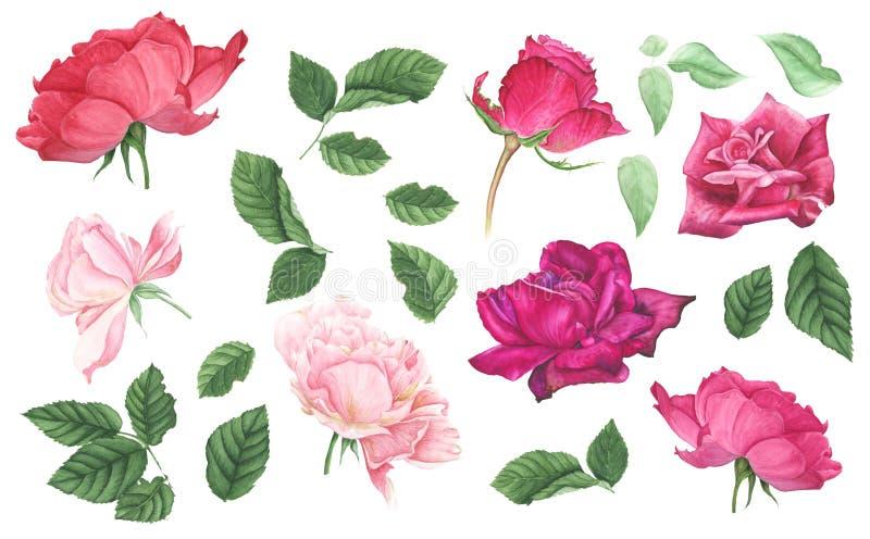 Uppsättning av rosa och röda rosor och sidor, vattenfärgmålning stock illustrationer