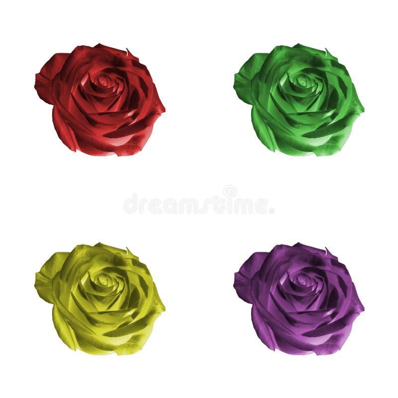 Uppsättning av rosor som isoleras på vit royaltyfri foto