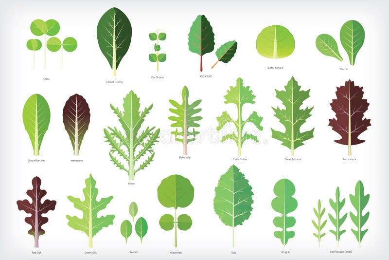 Uppsättning av salladgräsplaner royaltyfri illustrationer