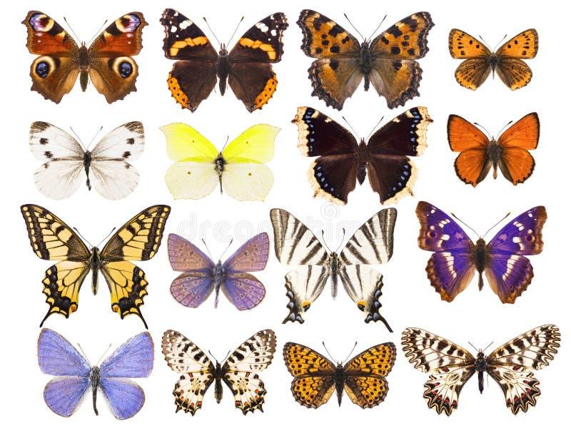 Uppsättning av sexton olika vibrerande europeiska fjärilar royaltyfri fotografi