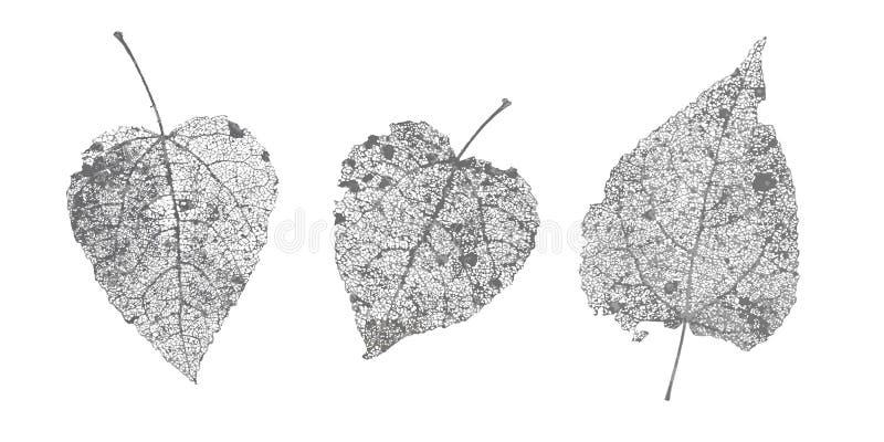 Uppsättning av sidor för svartgrå färgskelett på vit bakgrund Stupad lövverk för höstdesigner Naturlig bladasp och björk royaltyfri illustrationer