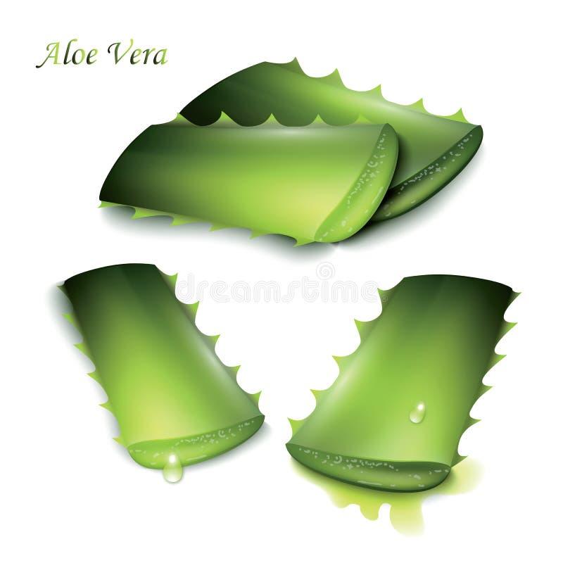 Uppsättning av snittstycken av aloe vera vektor illustrationer
