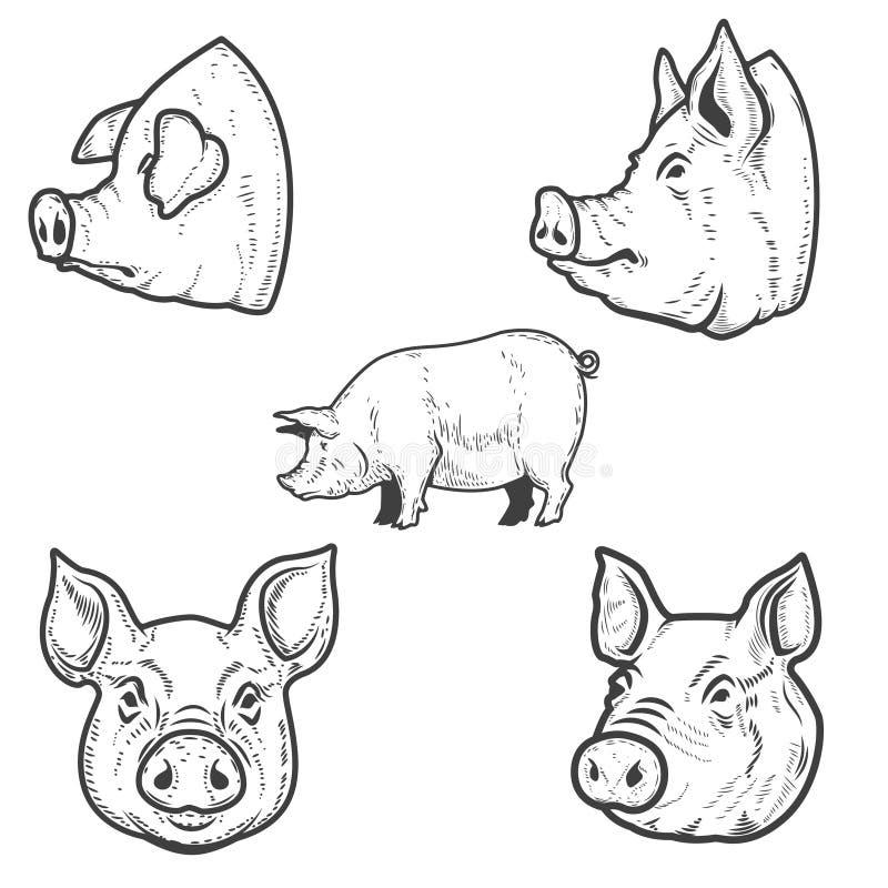 Uppsättning av svinillustrationer Griskötthuvud Planlägg beståndsdelen för emblemet, tecknet, affischen, emblem stock illustrationer