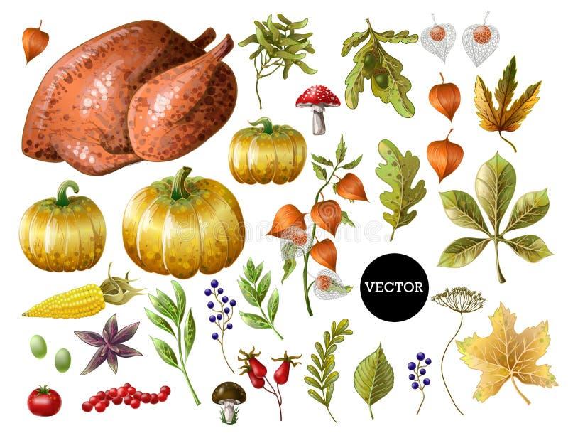 Uppsättning av tacksägelsedekor och mat, liksom kalkon, pumpor, druvor, sidor och annan som isoleras vektor royaltyfria foton