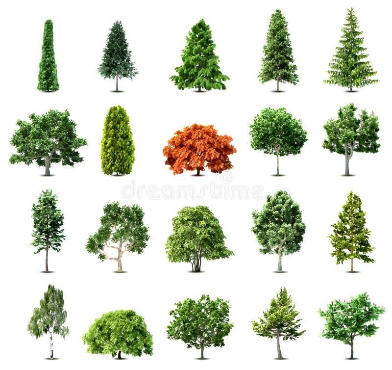 Uppsättning av träd som isoleras på vit bakgrund. Vektor stock illustrationer