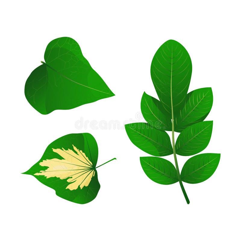 Uppsättning av tropiska gröna sidor Vektorillustrationsamling Isolerade beståndsdelar på den vita bakgrunden royaltyfri illustrationer