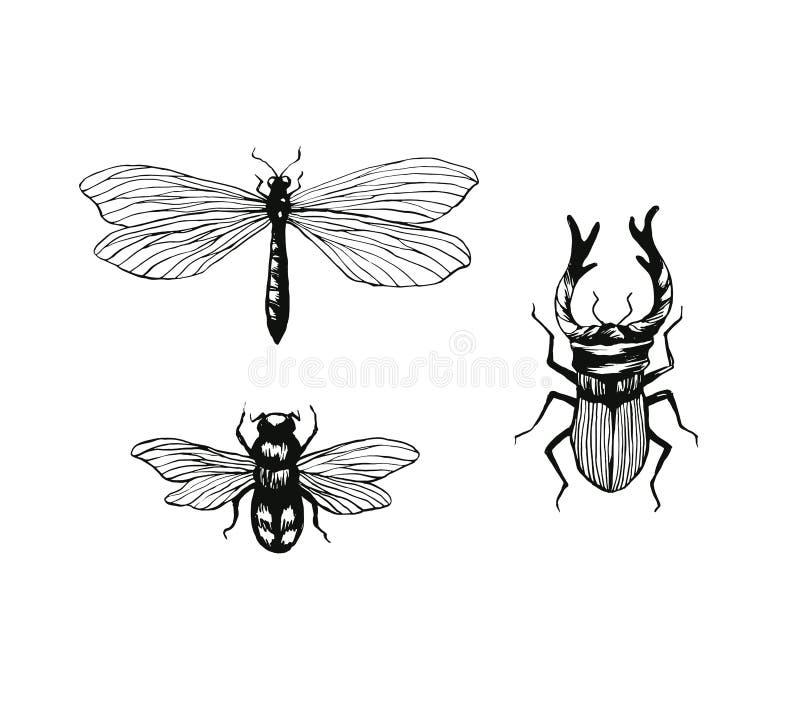 Uppsättning av utdragna kryp för hand, slända, humla, ekoxefärgpulverillustration som isoleras på vit stock illustrationer