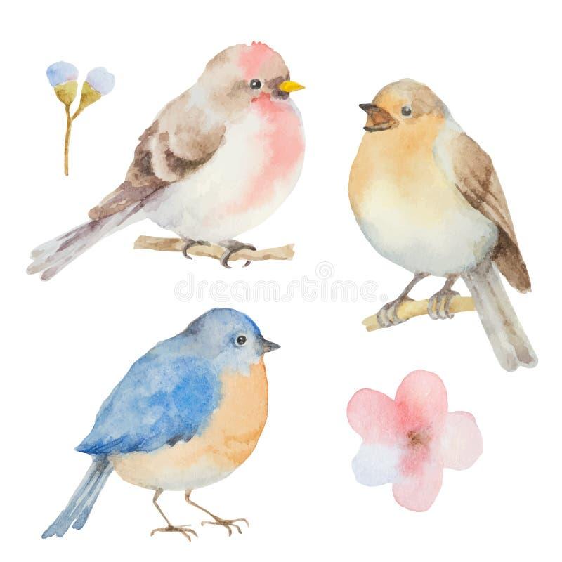 Uppsättning av vattenfärgfåglar och blommor vektor illustrationer