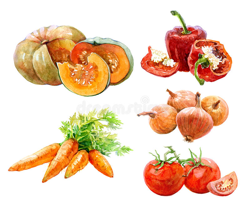 Uppsättning av vattenfärggrönsaker lök, paprika, papegoja, tomater, isolerad pumpa vektor illustrationer