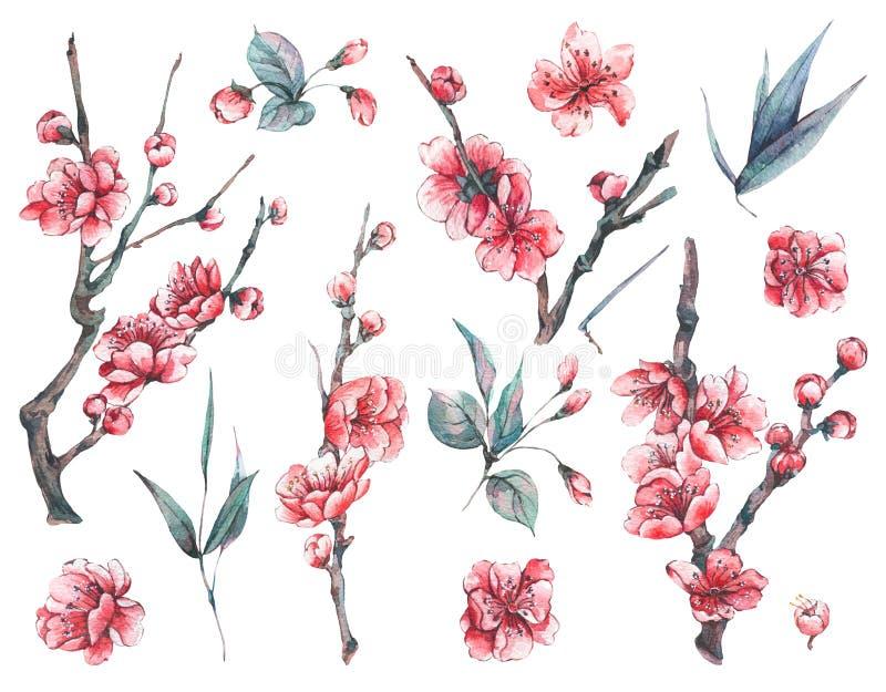 Uppsättning av vattenfärgvåren som blommar blom- beståndsdelar stock illustrationer