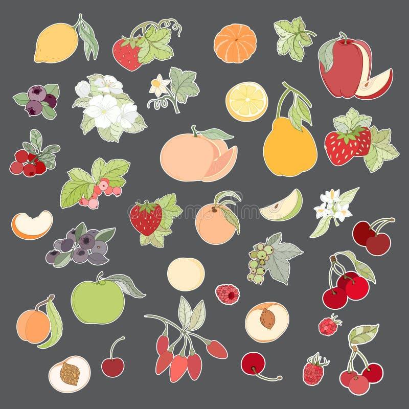 Uppsättning av vektorillustrationen av frukter och bär stock illustrationer