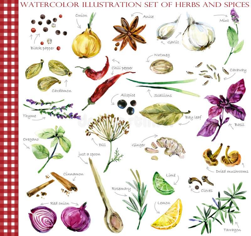 Uppsättning för ört- och kryddavattenfärgillustration stock illustrationer
