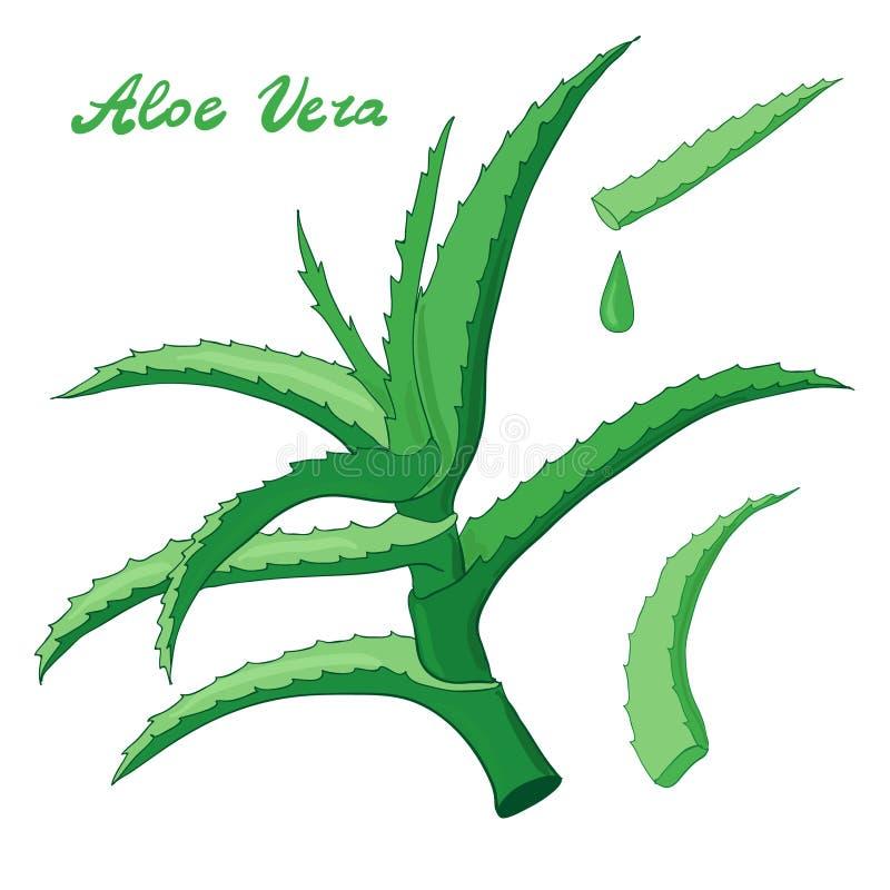 Download Uppsättning För Aloevera Vektor Vektor Illustrationer - Illustration av lotion, läkarundersökning: 76701177