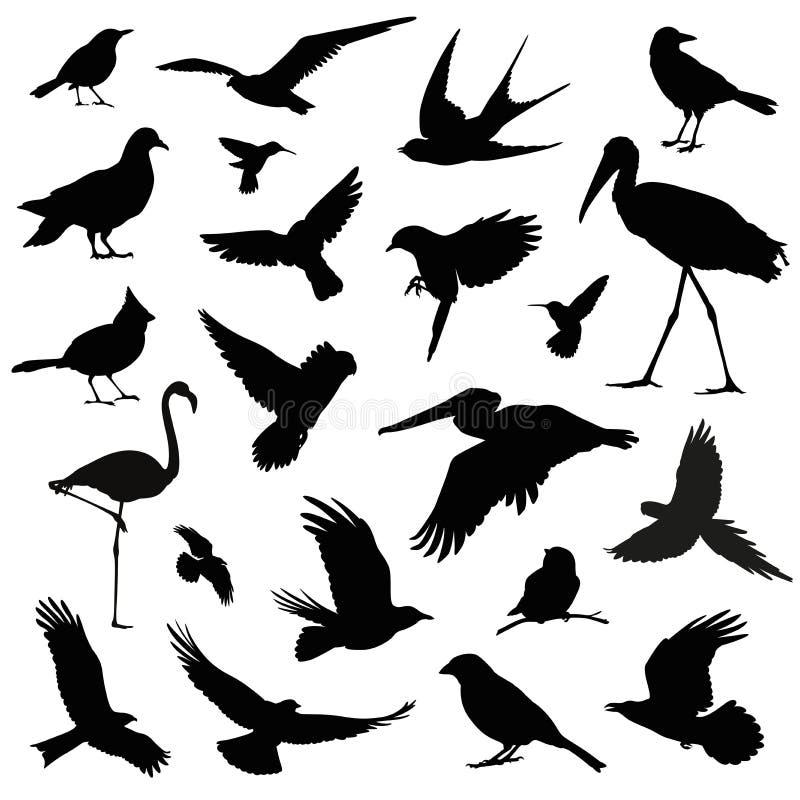 Uppsättning för fågelkonturillustration vektor illustrationer