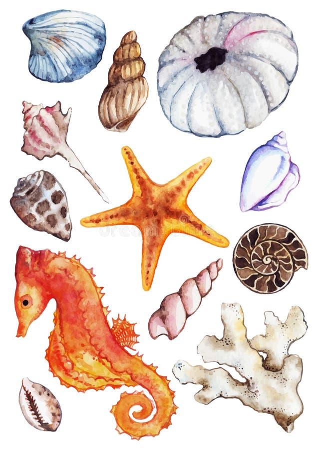 Uppsättning för gatubarn för ammonit för korall för snäckskal för seahorse för vattenfärghavshav royaltyfri illustrationer