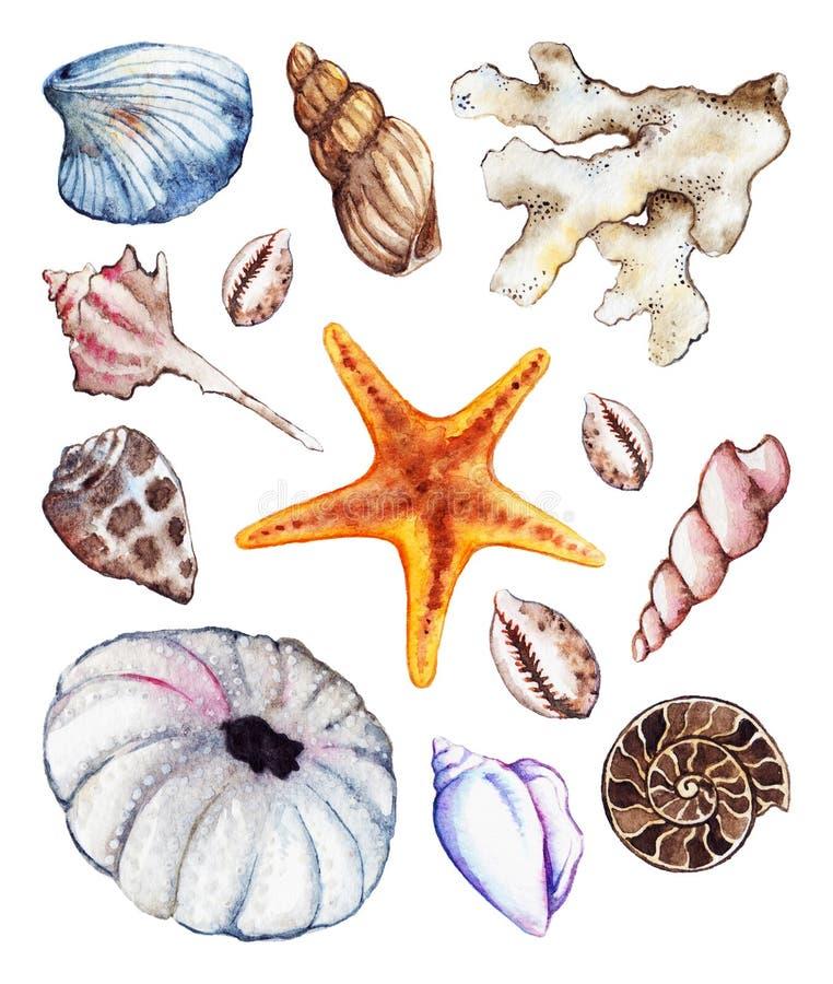 Uppsättning för gatubarn för ammonit för korall för snäckskal för seahorse för vattenfärghavshav stock illustrationer