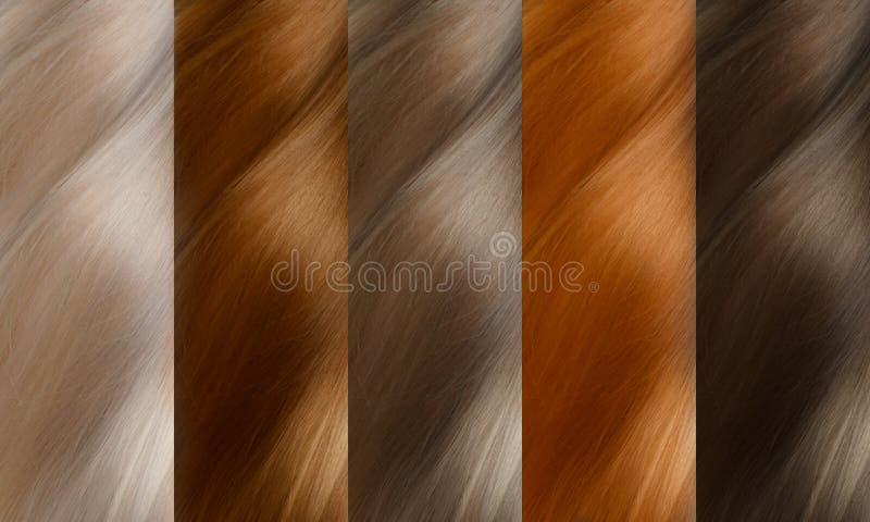 Uppsättning för hårsamlingsfärger toner royaltyfria bilder