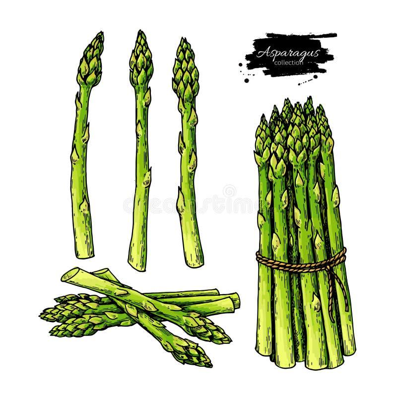 Uppsättning för illustration för vektor för sparrishand utdragen Isolerat färgrikt objekt för grönsak arkivfoto