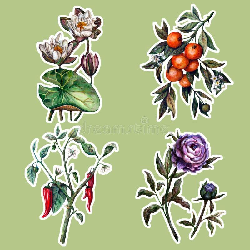 Uppsättning för klistermärkear för vattenfärgrealism botanisk royaltyfri illustrationer