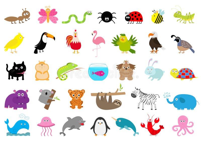 Uppsättning för löst djur för zoo älsklings- gulligt tecken Myra fjäril, spindel, nyckelpiga, bi, jaguar, tukan, hund, flodhäst,  stock illustrationer