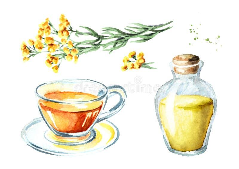 Uppsättning för Sandless immortellete och för nödvändig olja Gul blommaHelichrysumarenarium medicinal växt Dragen illust för vatt stock illustrationer