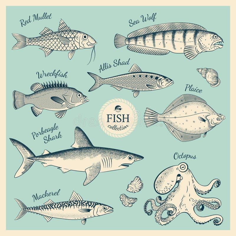 Uppsättning för tappningfiskillustration stock illustrationer