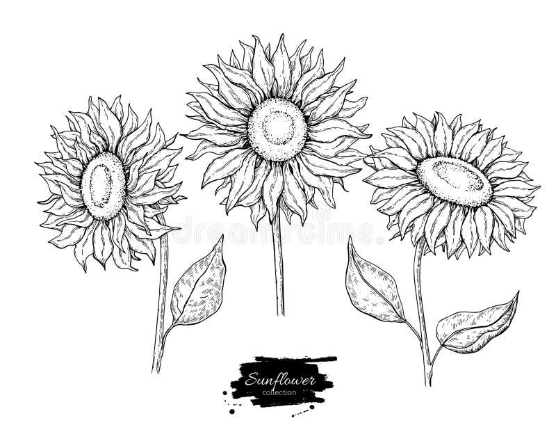 Uppsättning för teckning för solrosblommavektor Hand dragen illustration som isoleras på vit bakgrund royaltyfri illustrationer