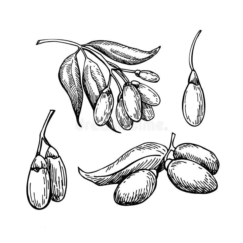 Uppsättning för teckning för superfood för Goji bärvektor Isolerad hand dragen il stock illustrationer