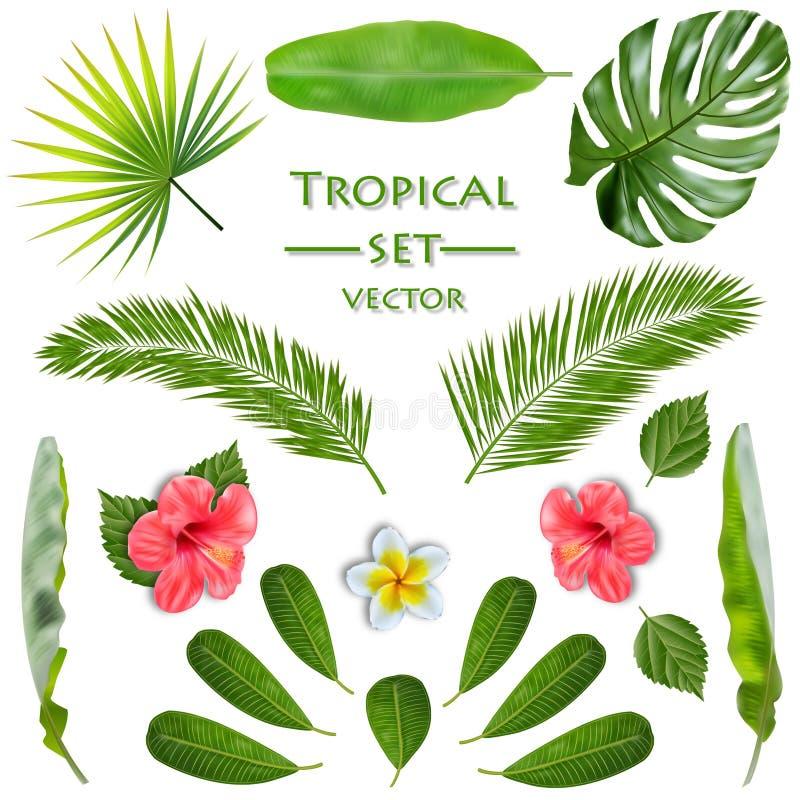 Uppsättning för tropisk växt vektor vektor illustrationer