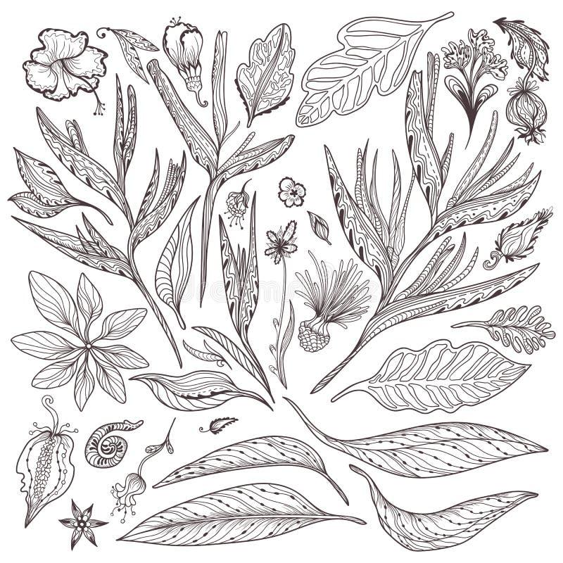Uppsättning för tropiska växter för vektor vektor illustrationer