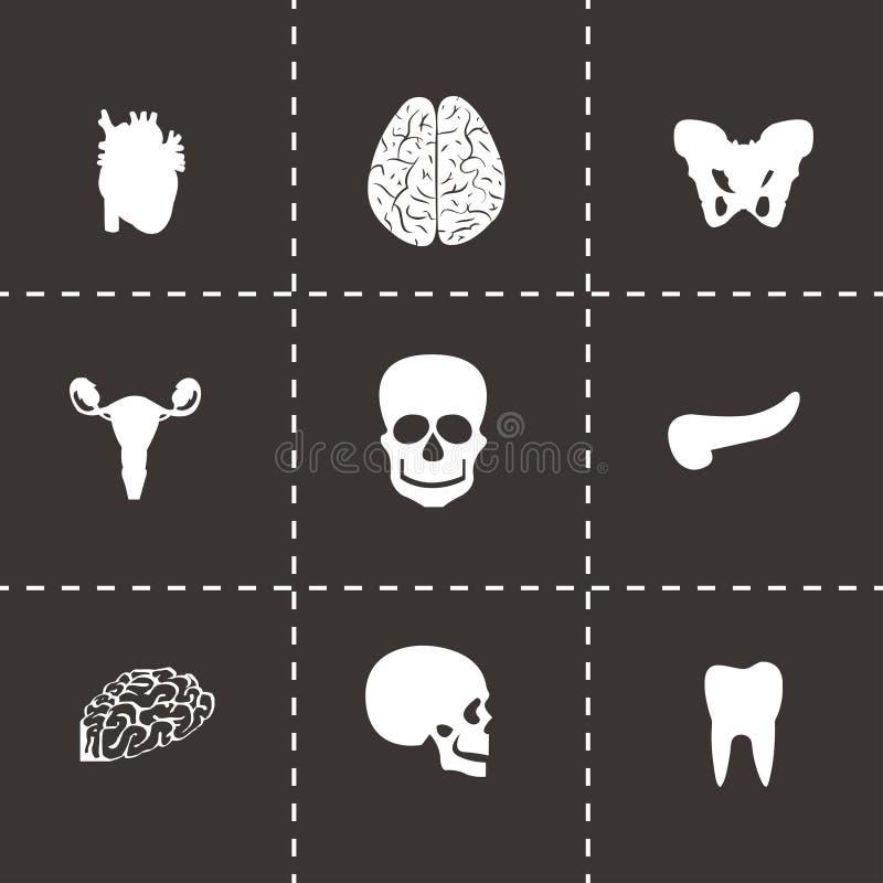 Uppsättning för vektoranatomisymboler royaltyfri illustrationer