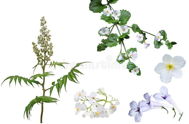 Uppsättning för vit blomma royaltyfri fotografi