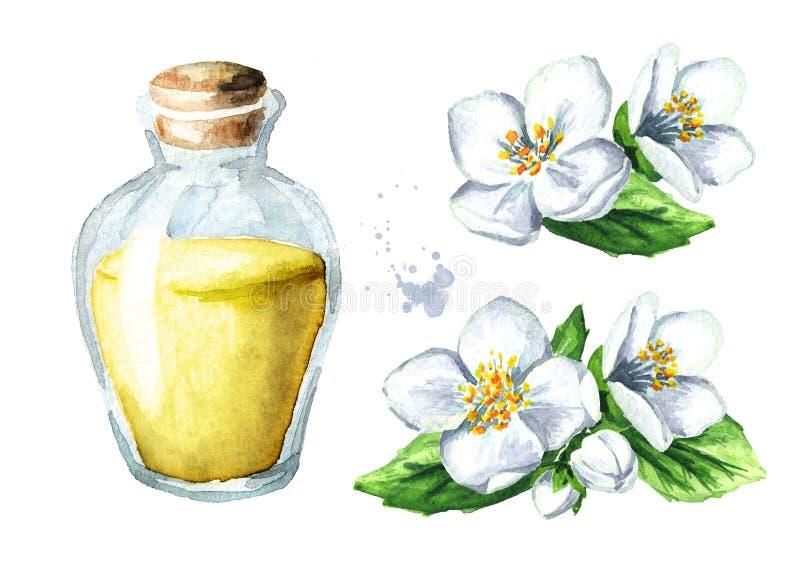 Uppsättning för vit jasminblomma och för nödvändig olja aromatherapy brunnsort dragen illustration för vattenfärg som hand isoler vektor illustrationer