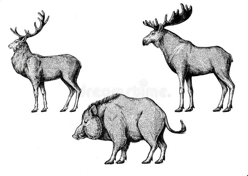 uppsättning nio av vektorn skissar Älg älg, galt, gödsvin, svin, aper vektor illustrationer