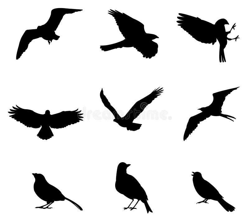 Uppsättningar av silhouettefåglar, skapar vid vektorn vektor illustrationer