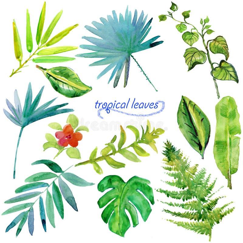 Uppsättningen av den gröna tropiska vattenfärgen lämnar och växter royaltyfri illustrationer