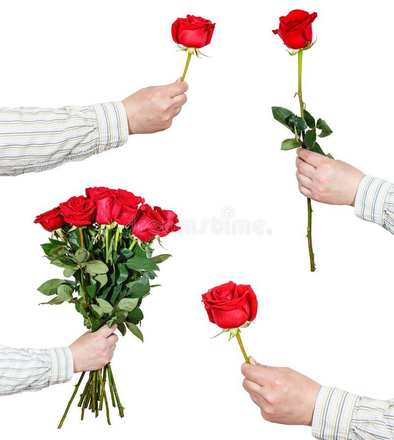 Uppsättningen av den röda rosen blommar i handen som isoleras på vit royaltyfria bilder