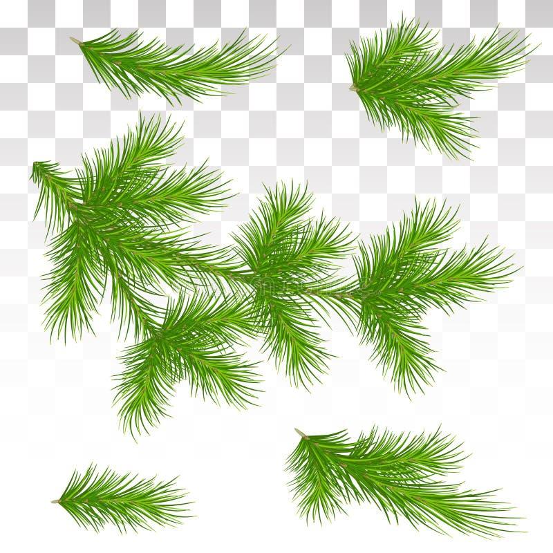 Uppsättningen av gräsplan sörjer filialer isolerat Jul dekor Chrien royaltyfri illustrationer
