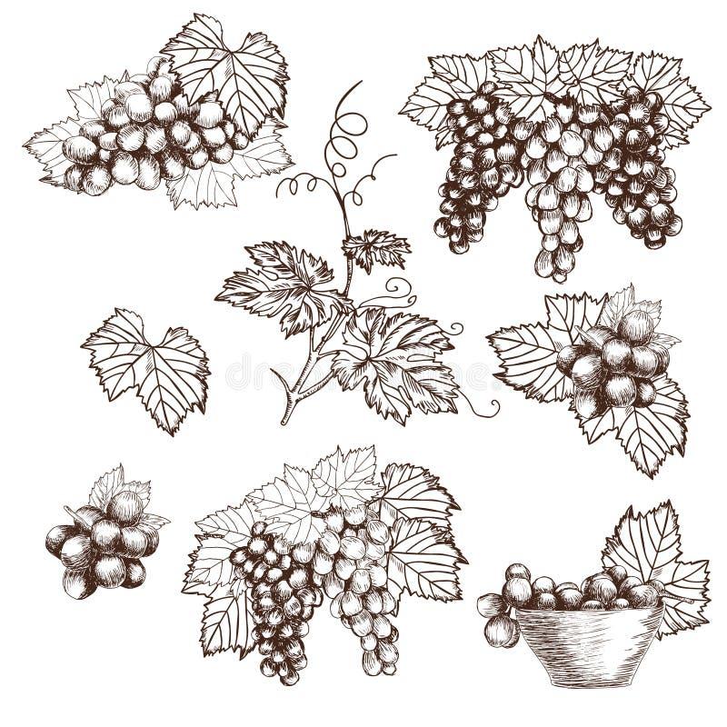 Uppsättningen av gruppdruvor skissar stilvektorillustrationen Gammal gravyrefterföljd tecknad hand stock illustrationer