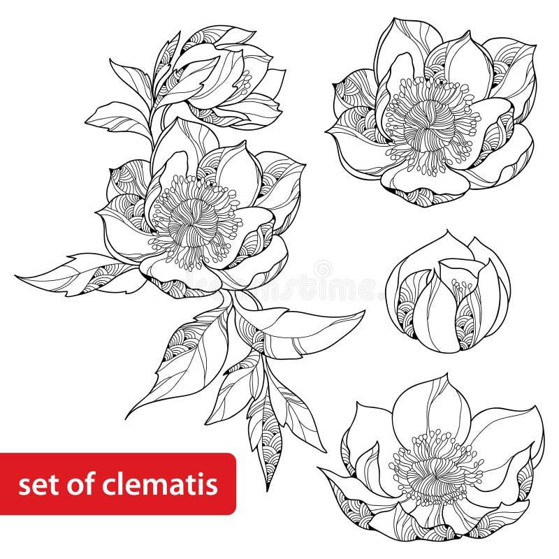 Uppsättningen av klematis blommar isolerat på vit bakgrund stock illustrationer