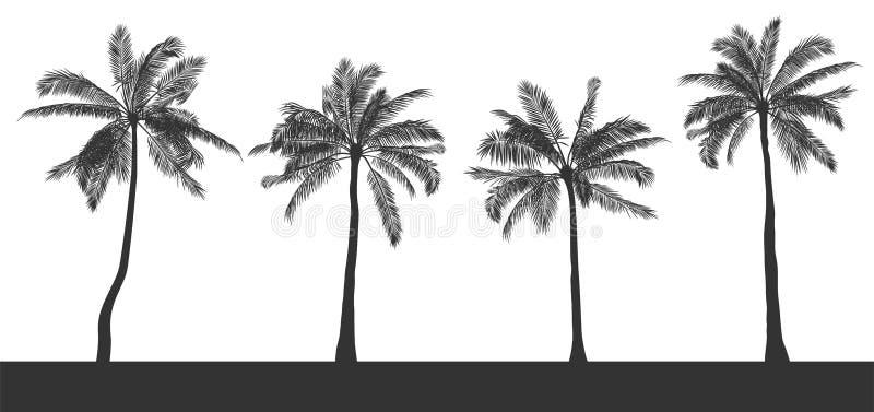 Uppsättningen av konturer av palmträd på vit isolerade bakgrund Hand dragen realistisk kontur Mall för utskrift och royaltyfri illustrationer