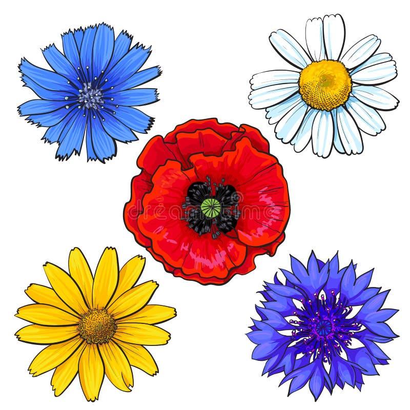 Uppsättningen av löst, fält blommar - vallmo, kamomillen, blåklint, tusensköna royaltyfri illustrationer