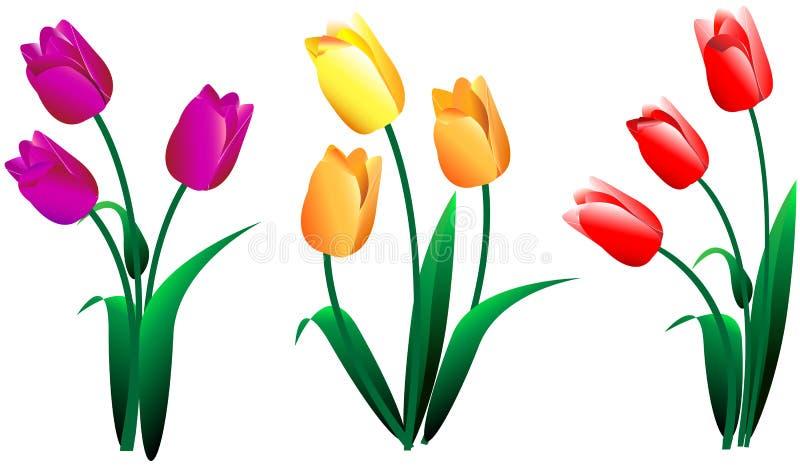 Uppsättningen av olika buketter av gula röda rosa färger blommar tulpan stock illustrationer