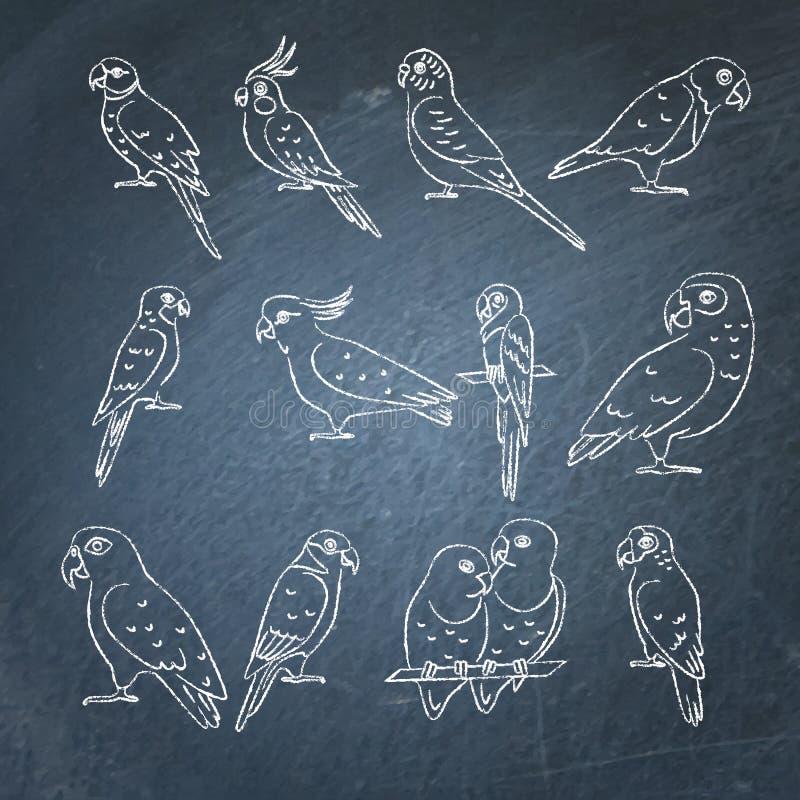 Uppsättningen av papegojasymbolen skissar på den svart tavlan stock illustrationer