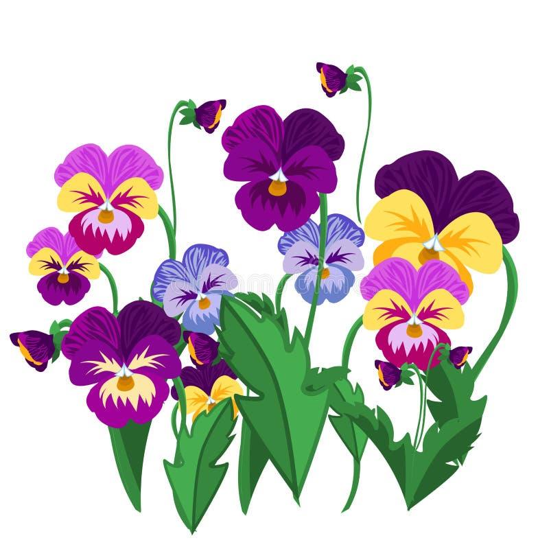 Uppsättningen av penséen blommar den violetta illustrationen för vektorn för den trädgårds- växten för blom stock illustrationer