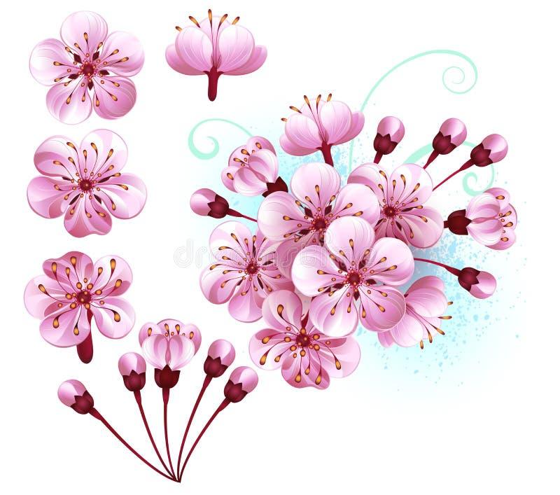 Uppsättningen av sakura blommar rosa blommor vektor illustrationer