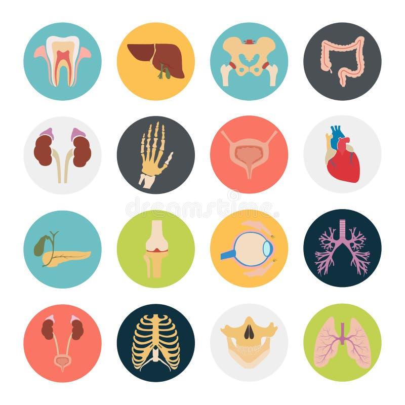Uppsättningen av sexton mänskliga organ och anatomic delar färgar plana symboler royaltyfri illustrationer
