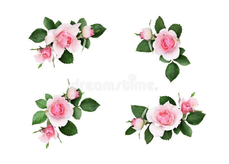 Uppsättningen av små blom- hörnordningar med rosa färgrosen blommar a stock illustrationer