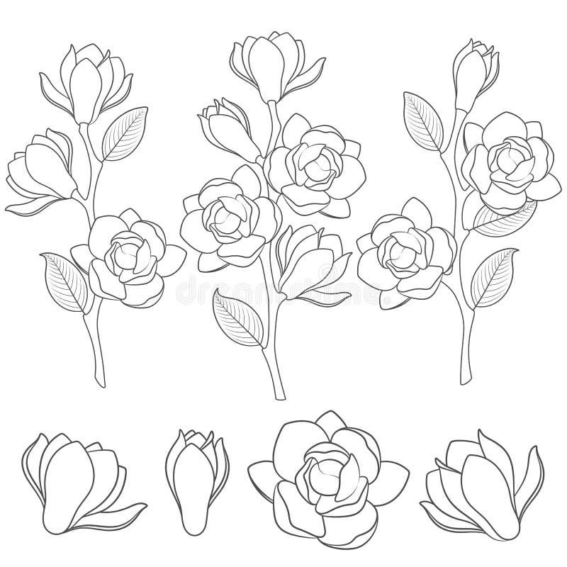 Uppsättningen av svartvita illustrationer med blomningmagnolian förgrena sig Isolerade vektorobjekt royaltyfri illustrationer