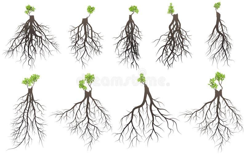 Uppsättningen av trädet rotar vektor illustrationer